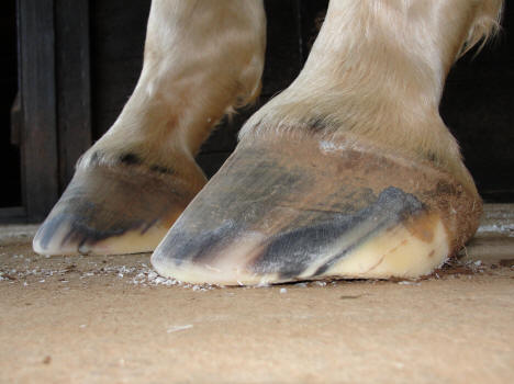 High/Low Hooves
